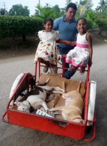 trike dogs