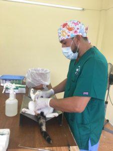 Cat sterlization