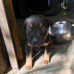 Negra pup 2