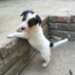 Negra pup 3